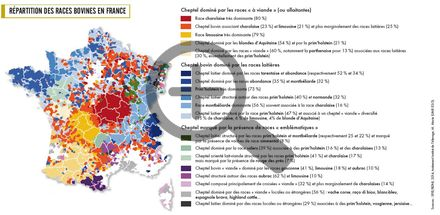Répartition des races bovines en France