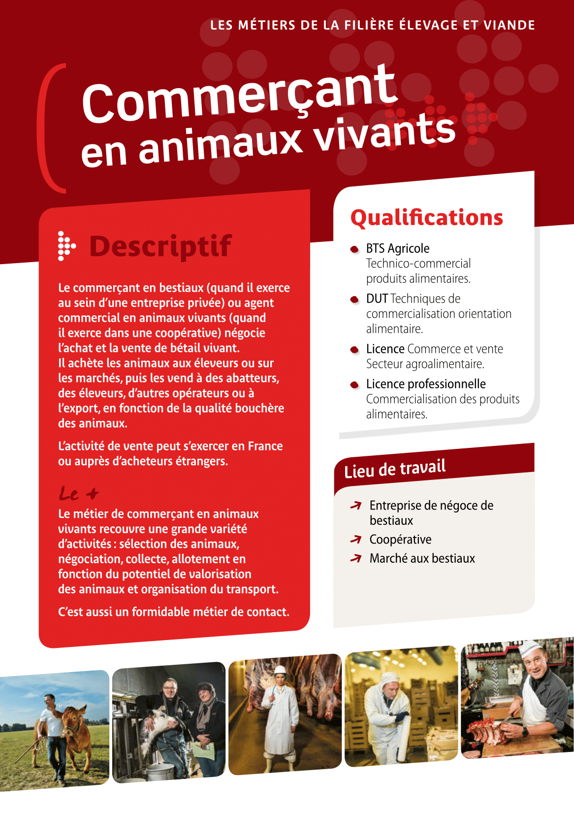 Commerçant en animaux vivants