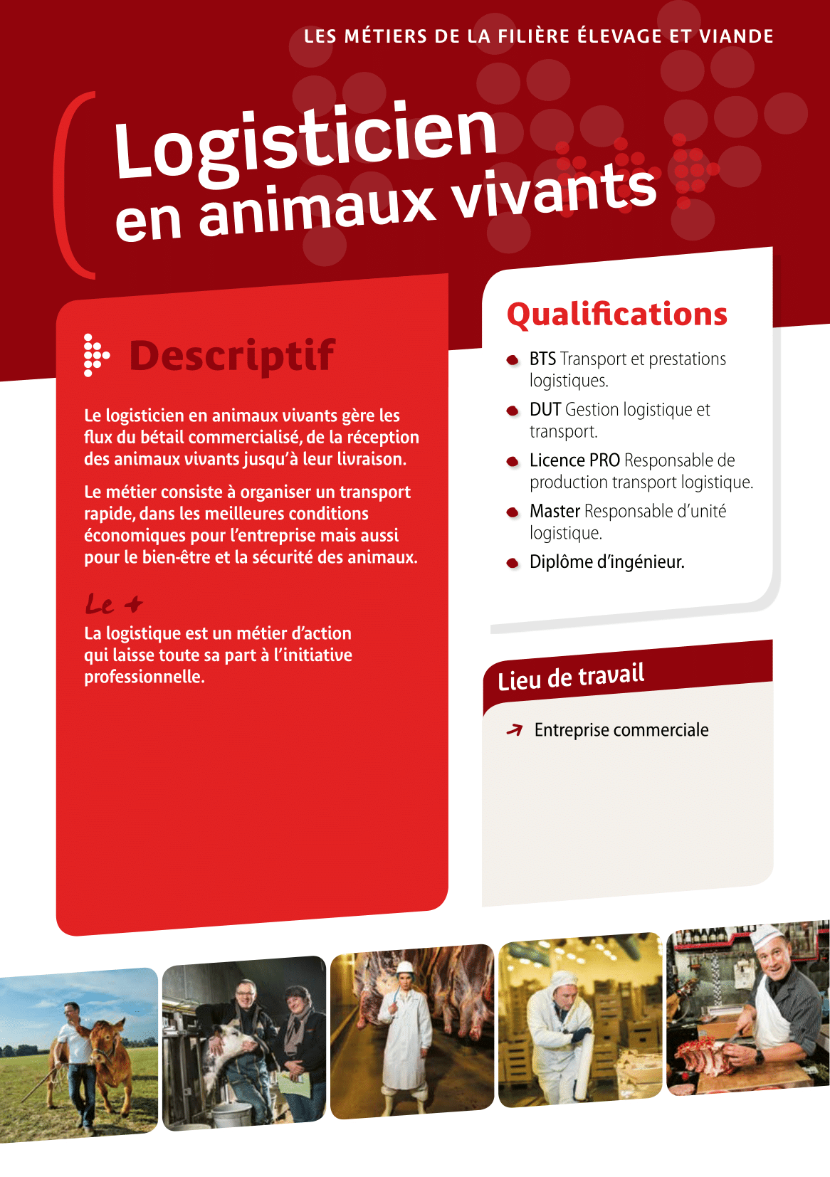 Logisticien en animaux vivants