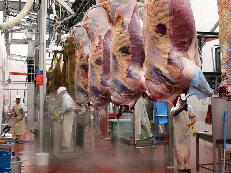 Une traçabilité totale de la viande