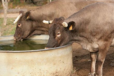 De l'eau potable à volonté