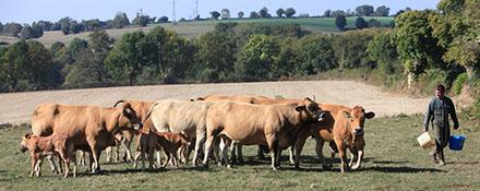 L'organisation de l'élevage bovin en France