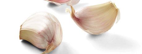 Les principaux condiments : Ail, oignon et échalote