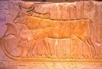 Animaux, histoires et légendes du monde Hathor