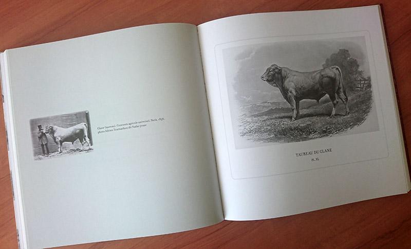 Les vaches ont une histoire, naissance des races bovines.
