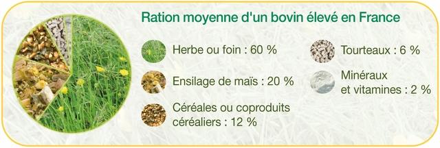 Ration moyenne d'un bovin élevé en France