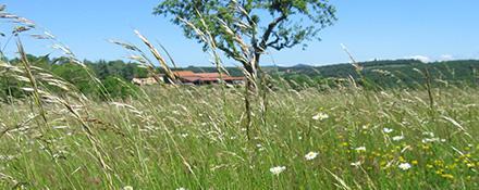 La biodiversité et le rôle écologique des prairies