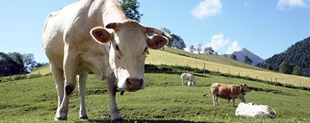 Elevage et économie rurale
