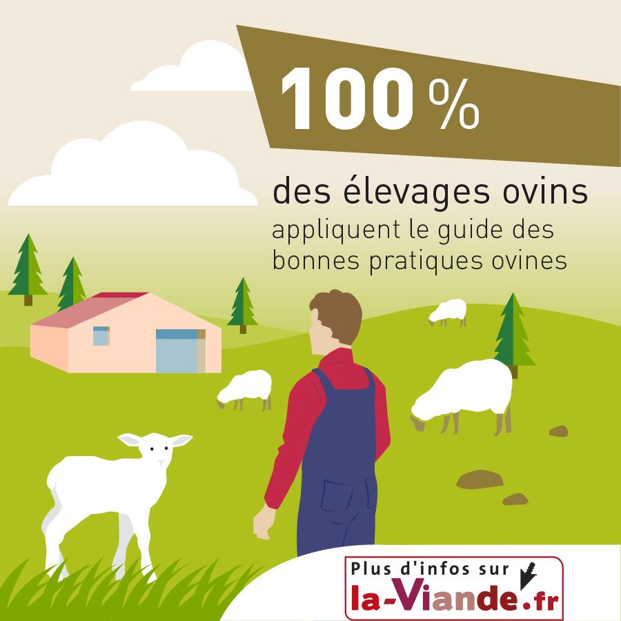 100% des élevages ovins appliquent le guide des bonnes pratiques ovines