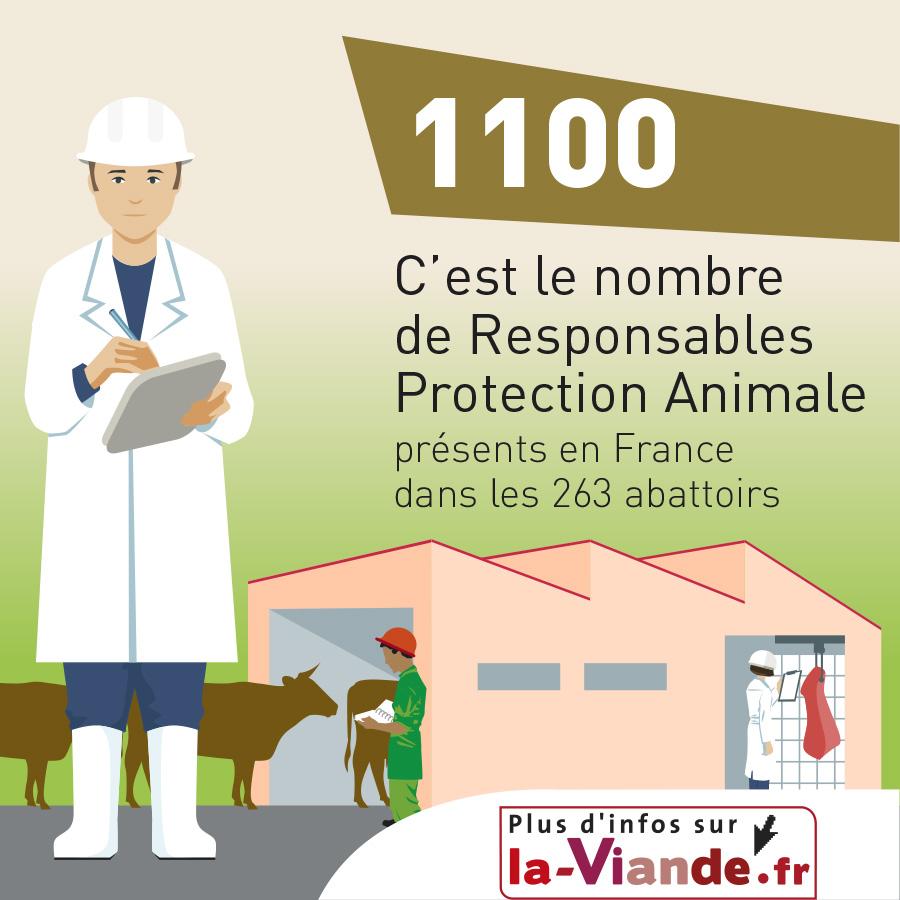 1100 C'est le nombre de Responsables Protection Animale présents en France dans les 263 abattoirs