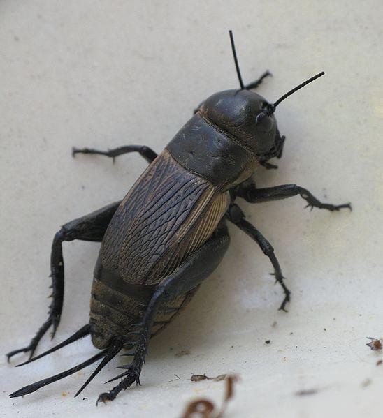 Biodiversité insectes