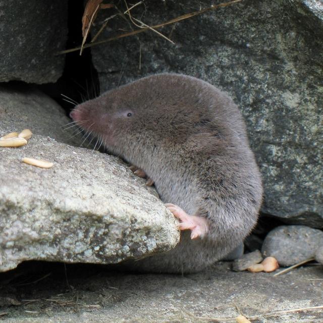 Biodiversité mammifères