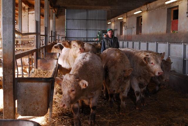 Le bien-être dans les marchés aux bestiaux