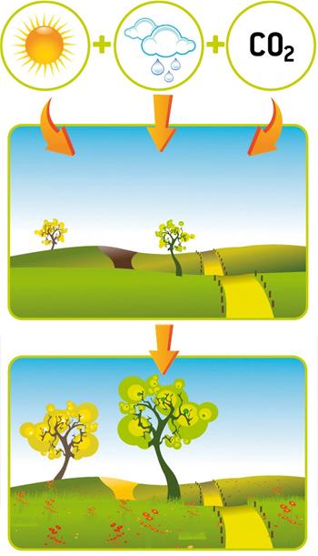 Le rôle des prairies : des puits de carbone