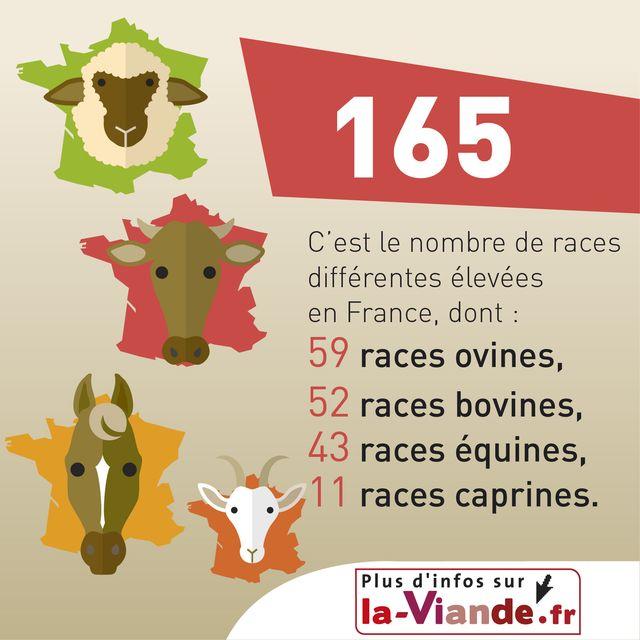 Très Elevage bovin, Vache, Porc, Veau et Agneau, Animal et elevage | La  WJ25