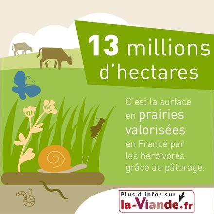 Les prairies, réservoirs de biodiversité