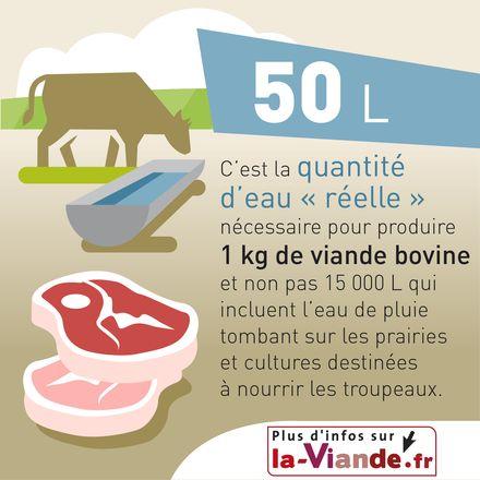Consommation d'eau et production de viande bovine