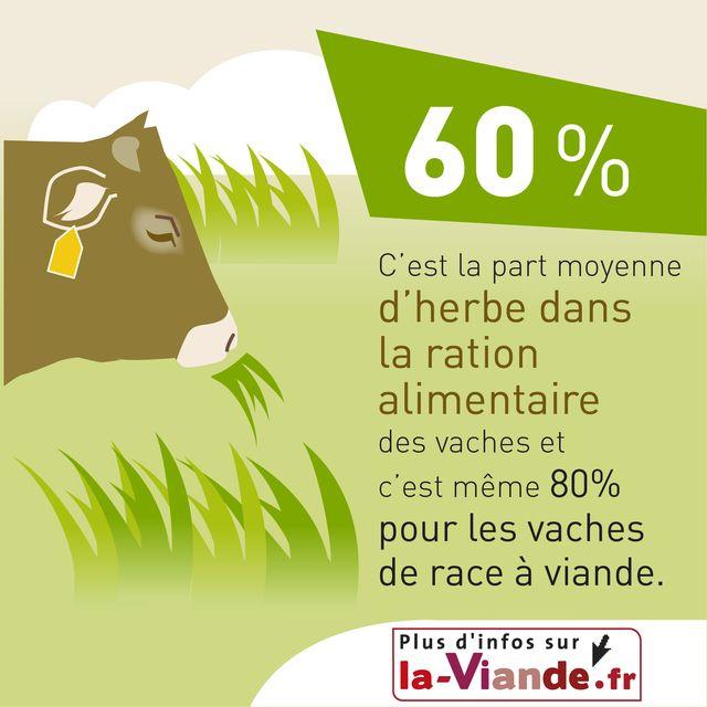Très L'alimentation des bovins | Animal et Elevage | La-viande.fr WJ25