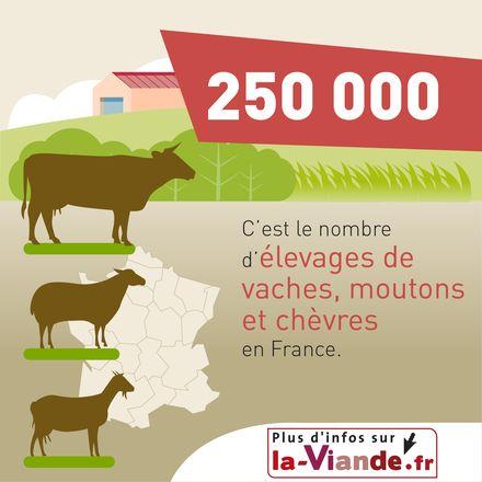 L'élevage et l'économie rurale