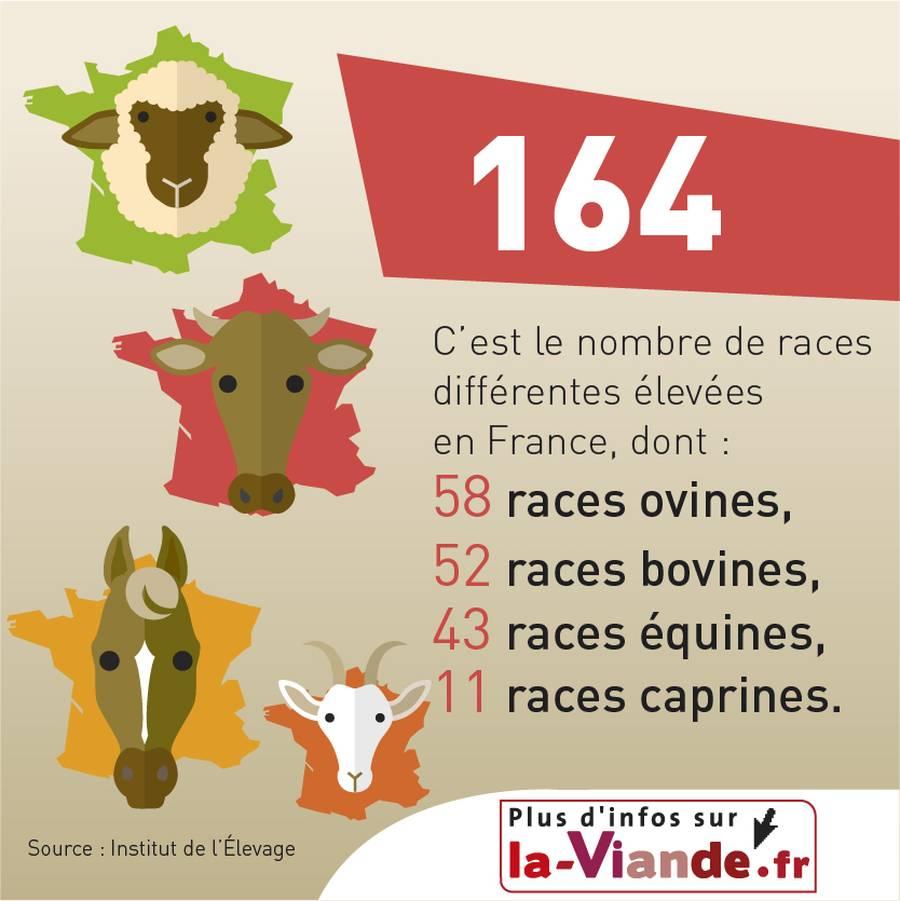 Élevage et races d'animaux