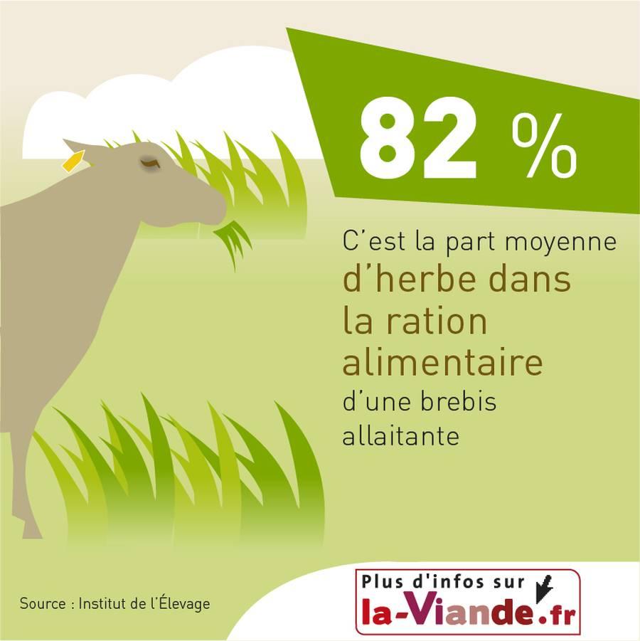 82 % c'est la part moyenne d'herbe dans la ration alimentaire d'une brebis allaitante