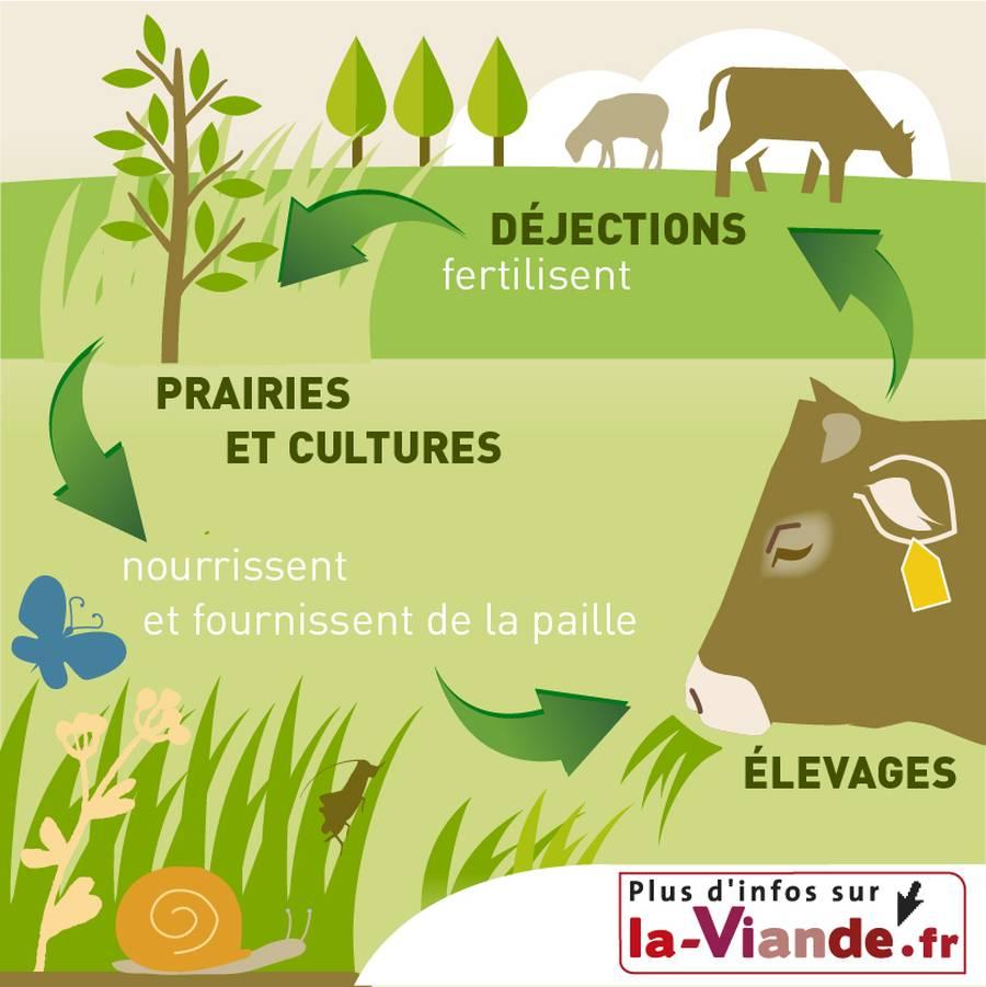L'alimentation des herbivores : place de l'herbe et lien au sol