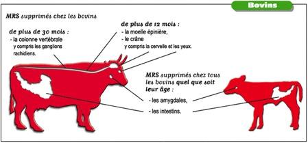 ESB MRS supprimés chez les bovins