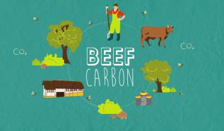 Le programme LIFE BEEF CARBON