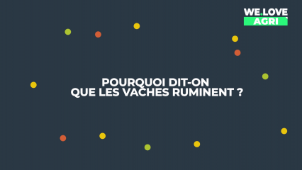 Pourquoi dit-on que les vaches ruminent ?
