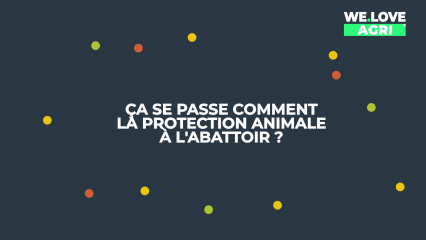Ca se passe comment la protection animale à l'abattoir ?